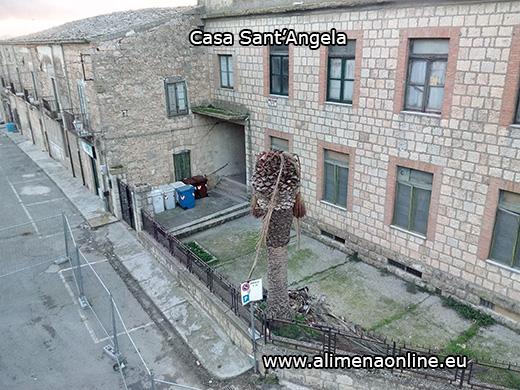 Il punteruolo rosso colpisce anche le palme del nostro paese. Già morta la storica palma di Casa Sant' Angela. A rischio le palme del Convento.