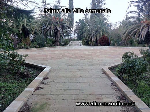 palme-villacomunale